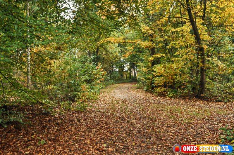 Bos nabij het Scheper Ziekenhuis in Emmen